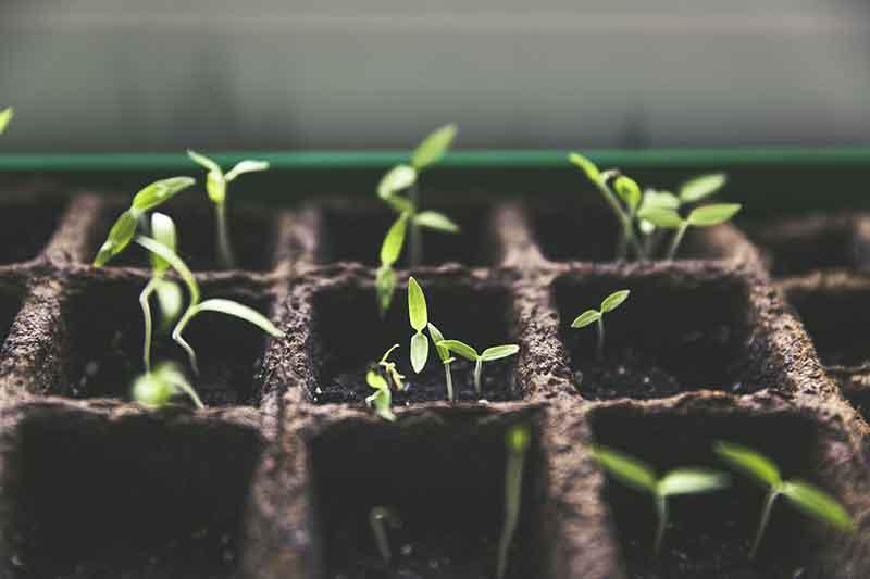 Pflanzenzucht Growbox Homebox Pflanzen